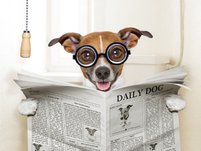 Everything you need to know about Puppy Potty Training