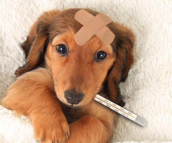 4 Tips to get your Furry Friend to take their Medicine
